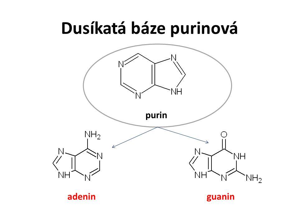 Dusíkatá báze purinová adeninguanin purin