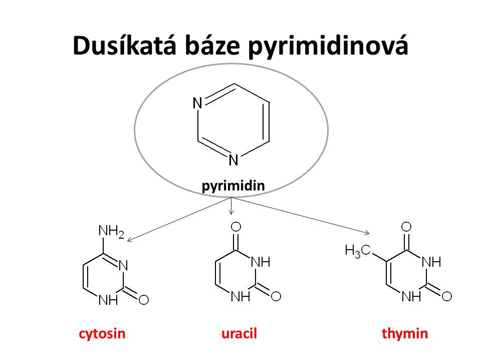 Dusíkatá báze pyrimidinová uracilthymincytosin pyrimidin