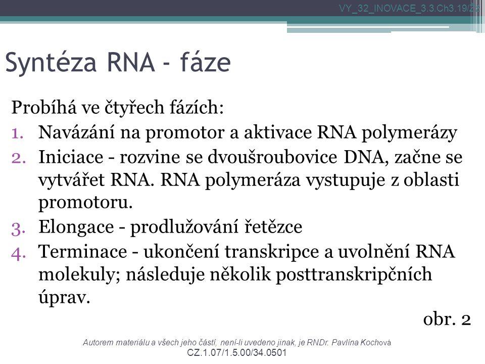 Syntéza RNA - fáze Probíhá ve čtyřech fázích: 1.Navázání na promotor a aktivace RNA polymerázy 2.Iniciace - rozvine se dvoušroubovice DNA, začne se vytvářet RNA.