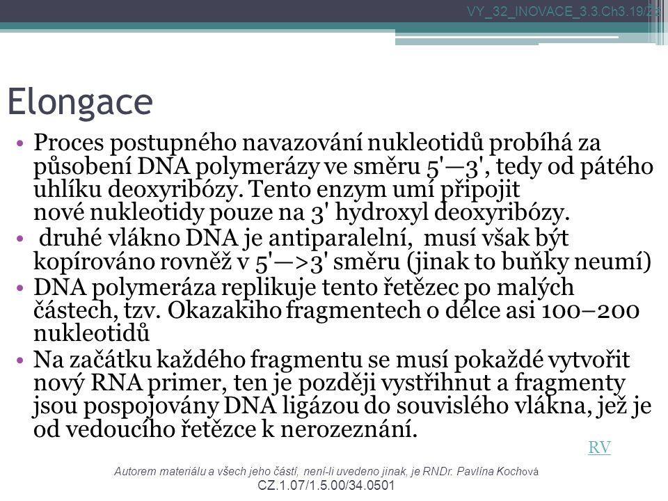 Elongace Proces postupného navazování nukleotidů probíhá za působení DNA polymerázy ve směru 5 —3 , tedy od pátého uhlíku deoxyribózy.