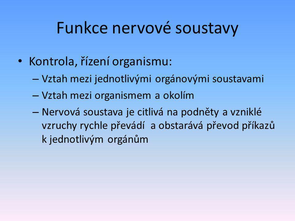 Funkce nervové soustavy Kontrola, řízení organismu: – Vztah mezi jednotlivými orgánovými soustavami – Vztah mezi organismem a okolím – Nervová soustava je citlivá na podněty a vzniklé vzruchy rychle převádí a obstarává převod příkazů k jednotlivým orgánům