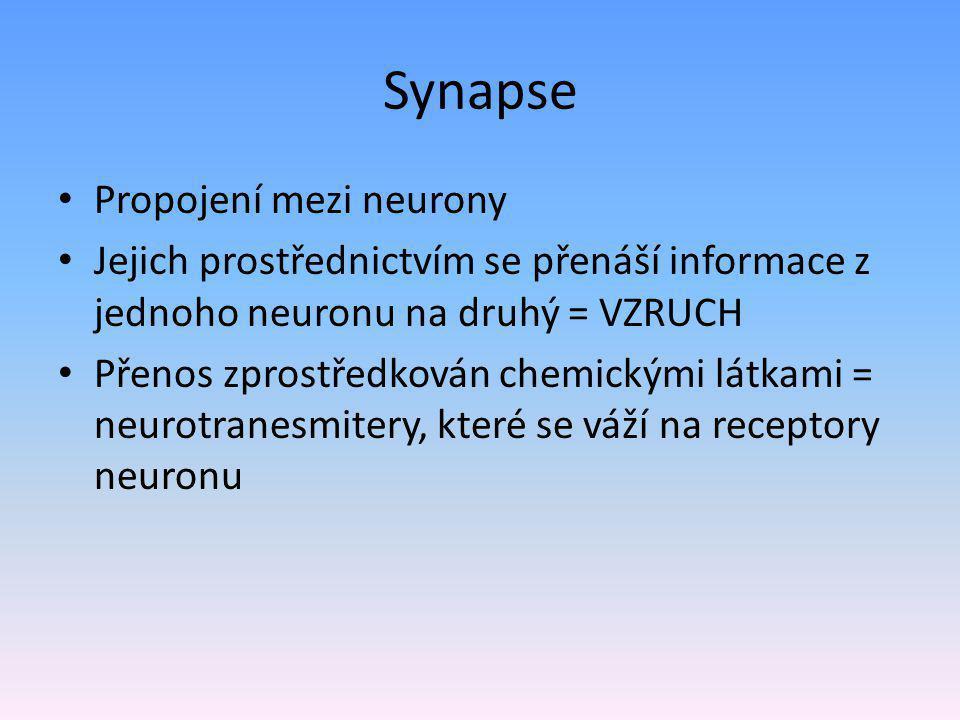 Synapse Propojení mezi neurony Jejich prostřednictvím se přenáší informace z jednoho neuronu na druhý = VZRUCH Přenos zprostředkován chemickými látkam