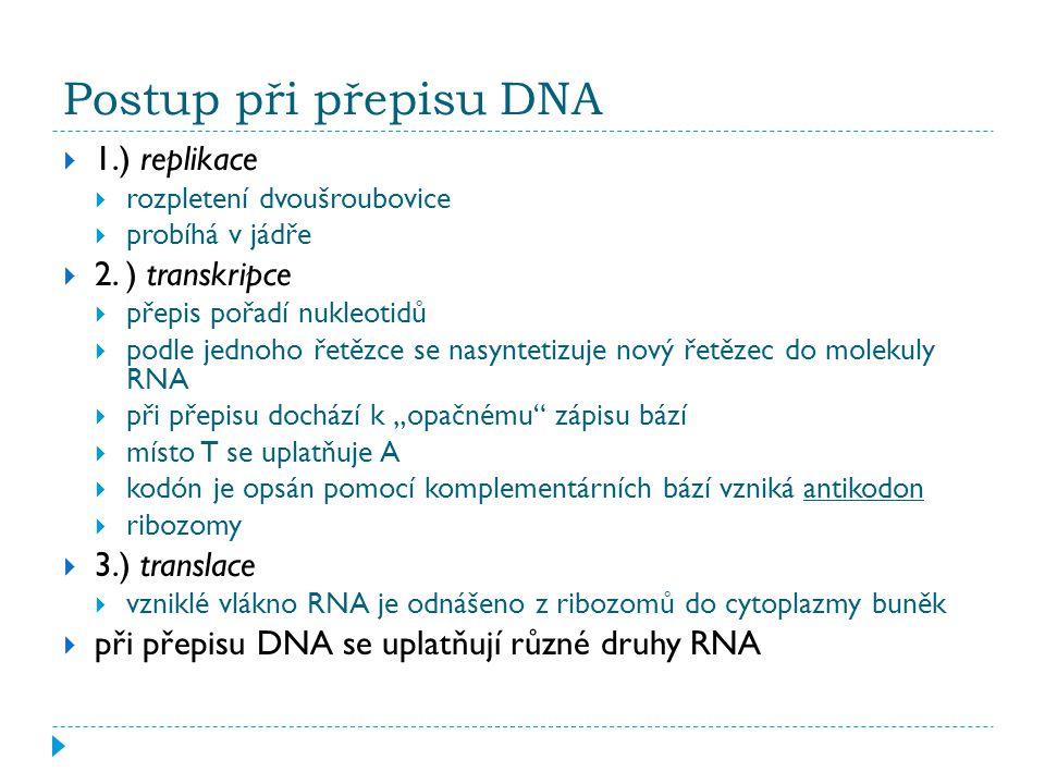 Postup při přepisu DNA  1.) replikace  rozpletení dvoušroubovice  probíhá v jádře  2.