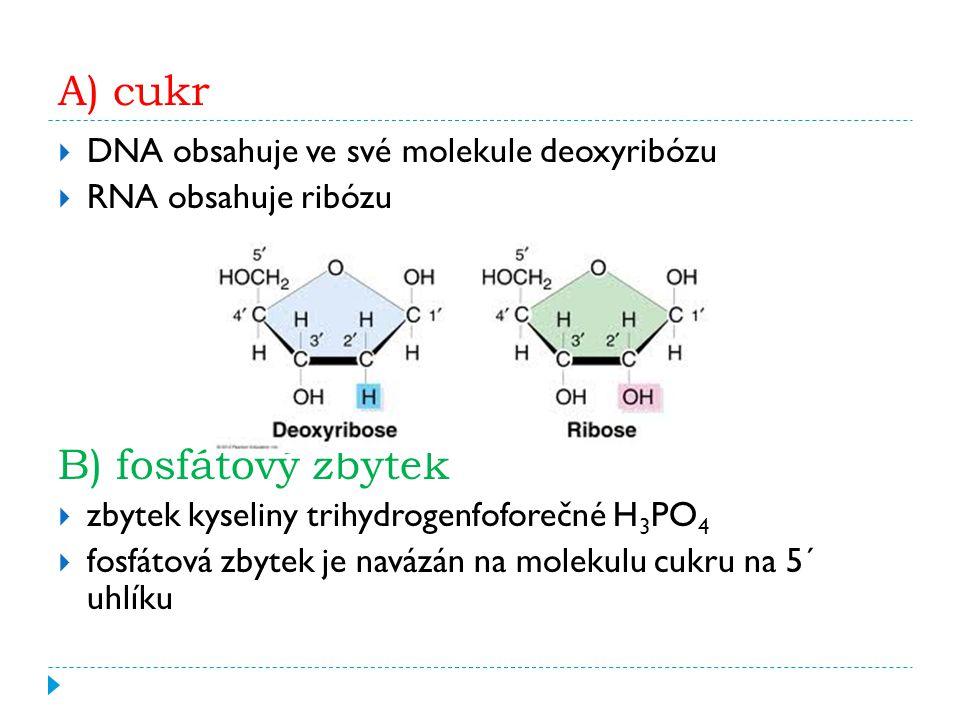 A) cukr  DNA obsahuje ve své molekule deoxyribózu  RNA obsahuje ribózu B) fosfátový zbytek  zbytek kyseliny trihydrogenfoforečné H 3 PO 4  fosfátová zbytek je navázán na molekulu cukru na 5´ uhlíku