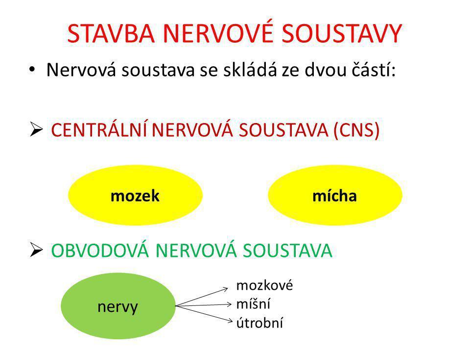 STAVBA NERVOVÉ SOUSTAVY Nervová soustava se skládá ze dvou částí:  CENTRÁLNÍ NERVOVÁ SOUSTAVA (CNS)  OBVODOVÁ NERVOVÁ SOUSTAVA mozekmícha nervy mozkové míšní útrobní