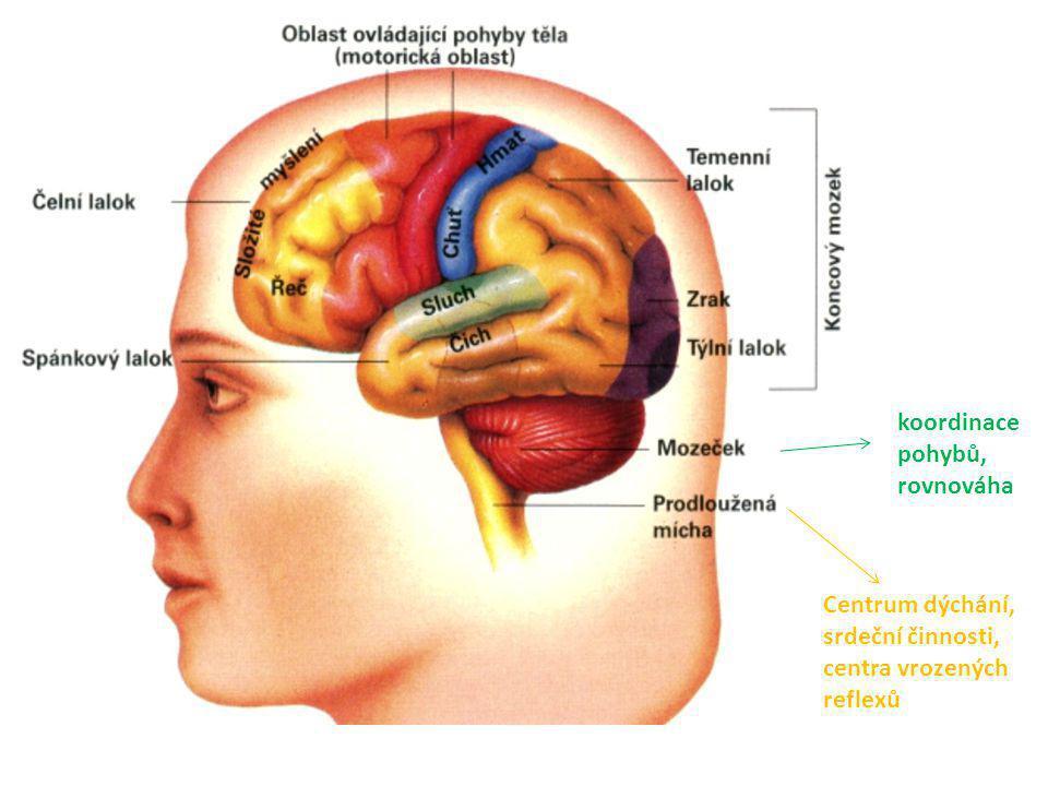 koordinace pohybů, rovnováha Centrum dýchání, srdeční činnosti, centra vrozených reflexů