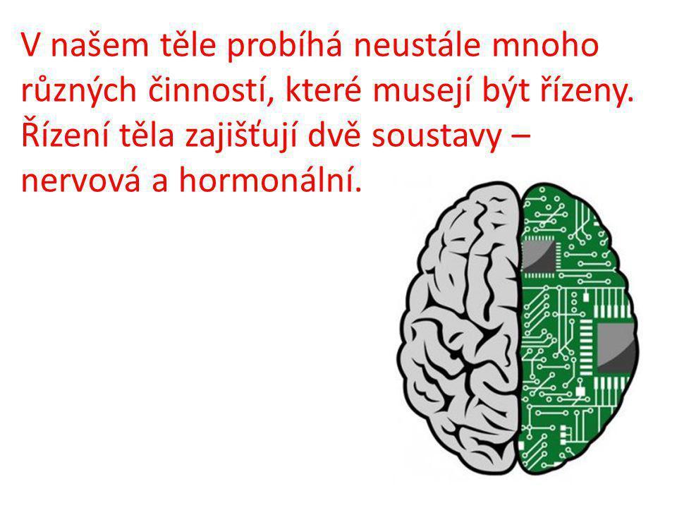 V našem těle probíhá neustále mnoho různých činností, které musejí být řízeny. Řízení těla zajišťují dvě soustavy – nervová a hormonální.
