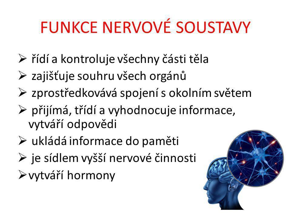 FUNKCE NERVOVÉ SOUSTAVY  řídí a kontroluje všechny části těla  zajišťuje souhru všech orgánů  zprostředkovává spojení s okolním světem  přijímá, třídí a vyhodnocuje informace, vytváří odpovědi  ukládá informace do paměti  je sídlem vyšší nervové činnosti  vytváří hormony