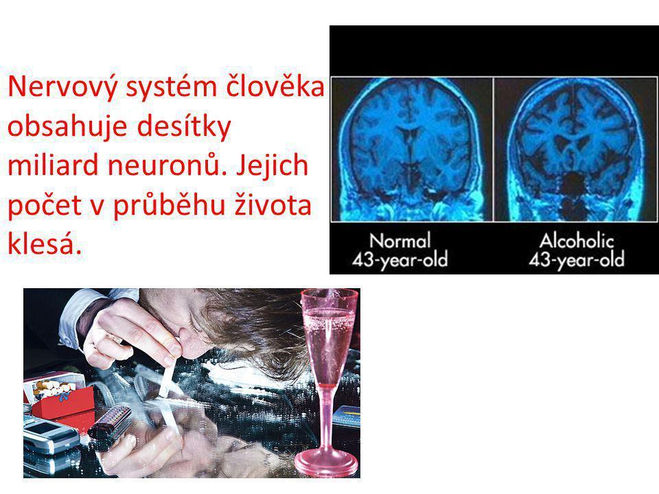 Nervový systém člověka obsahuje desítky miliard neuronů. Jejich počet v průběhu života klesá.