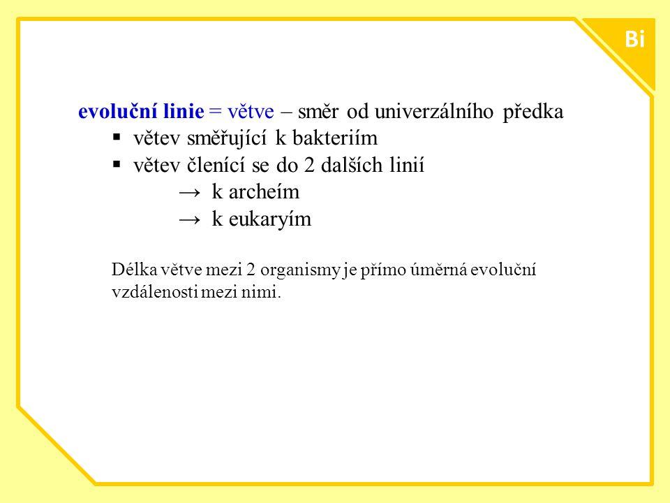 ttt1616 Bi evoluční linie = větve – směr od univerzálního předka  větev směřující k bakteriím  větev členící se do 2 dalších linií → k archeím → k e