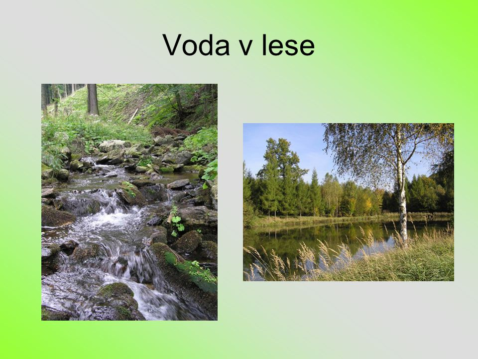 Voda v lese