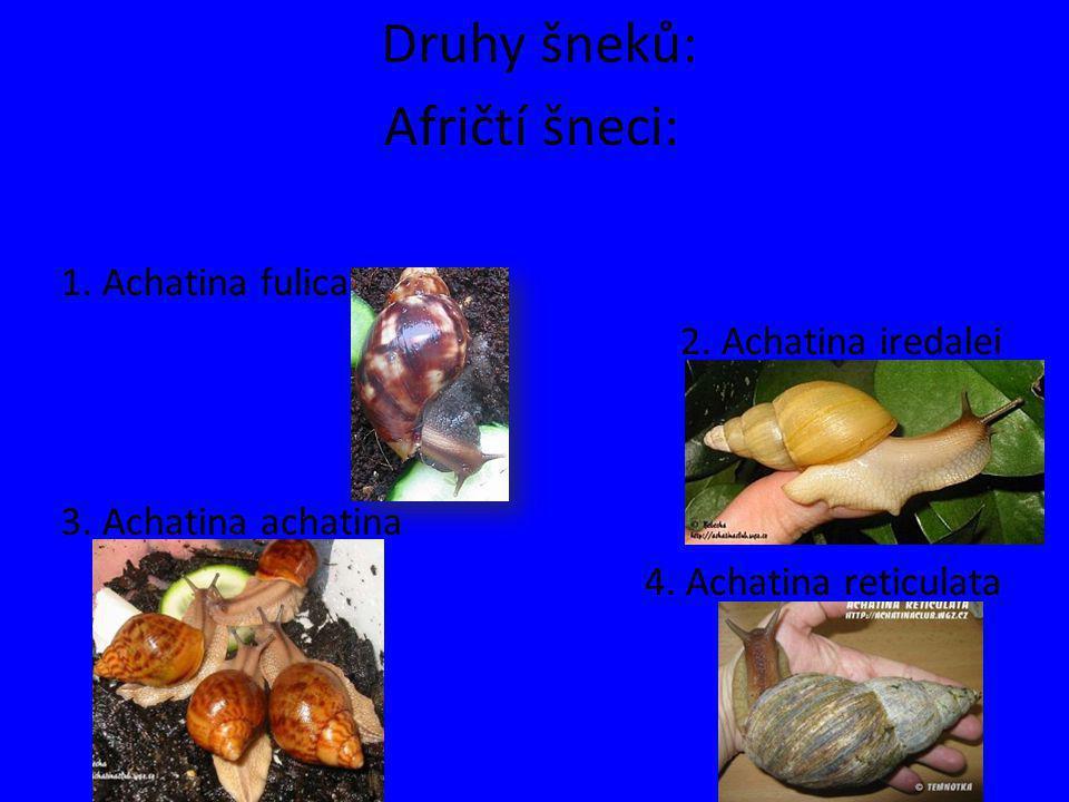 Druhy šneků: Afričtí šneci: 1. Achatina fulica 2. Achatina iredalei 3. Achatina achatina 4. Achatina reticulata