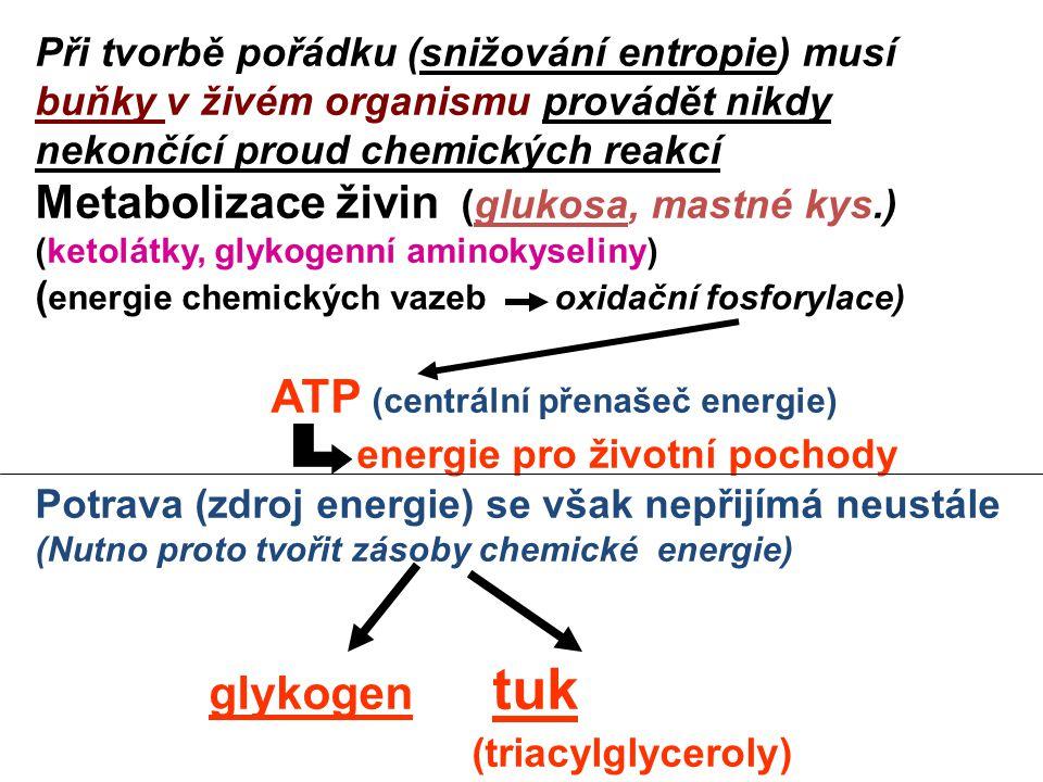 Při tvorbě pořádku (snižování entropie) musí buňky v živém organismu provádět nikdy nekončící proud chemických reakcí Metabolizace živin (glukosa, mastné kys.) (ketolátky, glykogenní aminokyseliny) ( energie chemických vazeb oxidační fosforylace) ATP (centrální přenašeč energie) energie pro životní pochody Potrava (zdroj energie) se však nepřijímá neustále (Nutno proto tvořit zásoby chemické energie) glykogen tuk (triacylglyceroly)