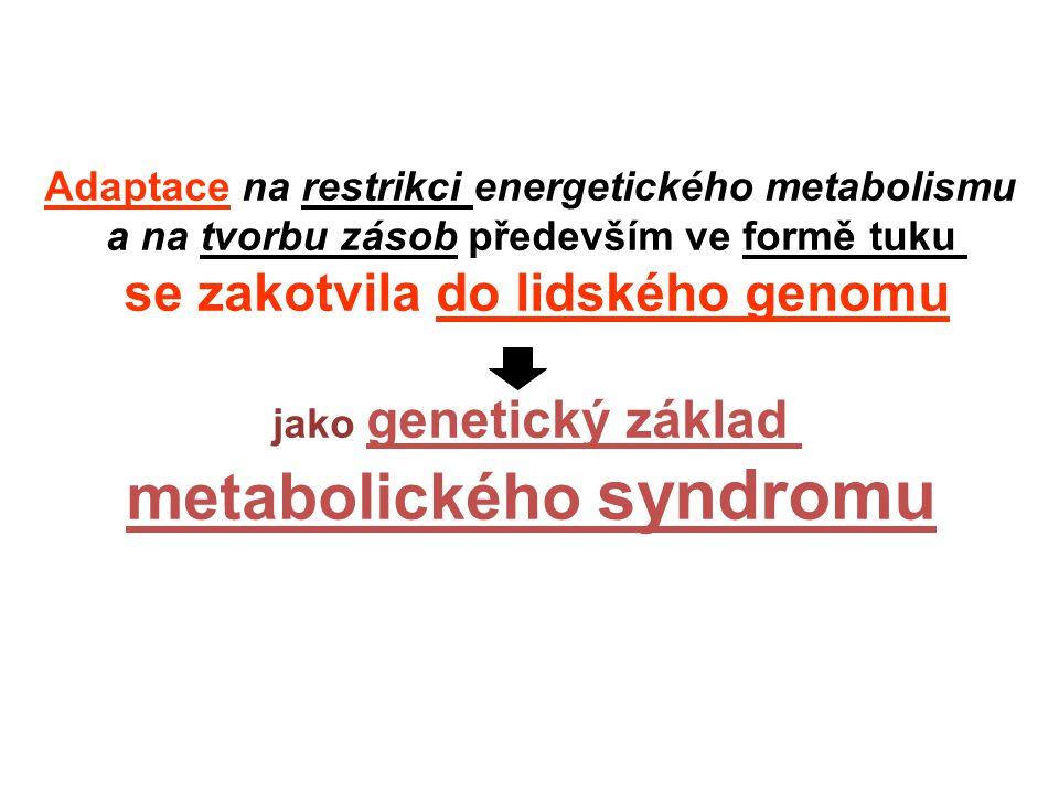 Adaptace na restrikci energetického metabolismu a na tvorbu zásob především ve formě tuku se zakotvila do lidského genomu jako genetický základ metabolického syndromu