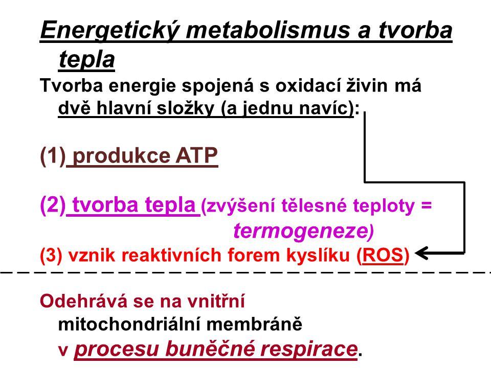 Energetický metabolismus a tvorba tepla Tvorba energie spojená s oxidací živin má dvě hlavní složky (a jednu navíc): (1) produkce ATP (2) tvorba tepla (zvýšení tělesné teploty = termogeneze ) (3) vznik reaktivních forem kyslíku (ROS) Odehrává se na vnitřní mitochondriální membráně v procesu buněčné respirace.