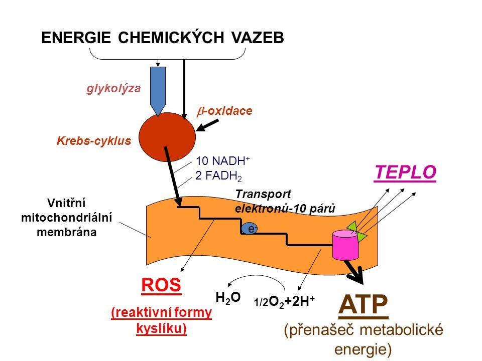 ENERGIE CHEMICKÝCH VAZEB ATP (přenašeč metabolické energie) TEPLO ROS (reaktivní formy kyslíku) glykolýza Krebs-cyklus 10 NADH + 2 FADH 2 Vnitřní mitochondriální membrána Transport elektronů-10 párů  -oxidace e-e- 1/2 O 2 +2H + H2OH2O