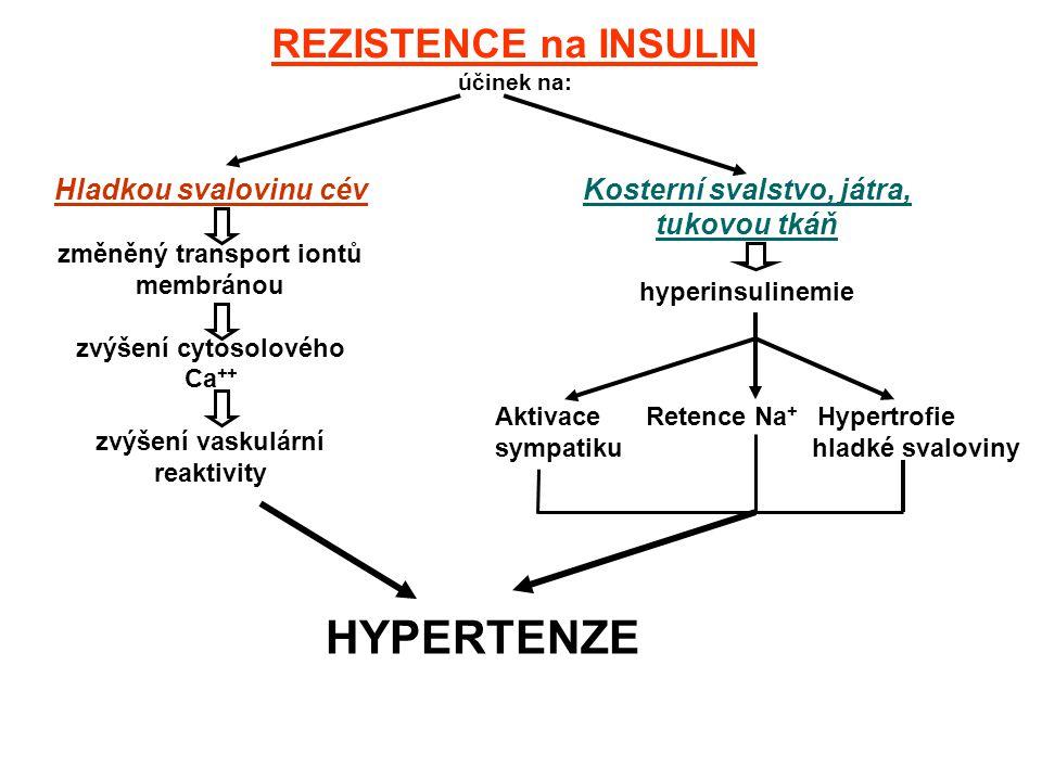 REZISTENCE na INSULIN účinek na: Hladkou svalovinu cév změněný transport iontů membránou zvýšení cytosolového Ca ++ zvýšení vaskulární reaktivity Kosterní svalstvo, játra, tukovou tkáň hyperinsulinemie Aktivace Retence Na + Hypertrofie sympatiku hladké svaloviny HYPERTENZE