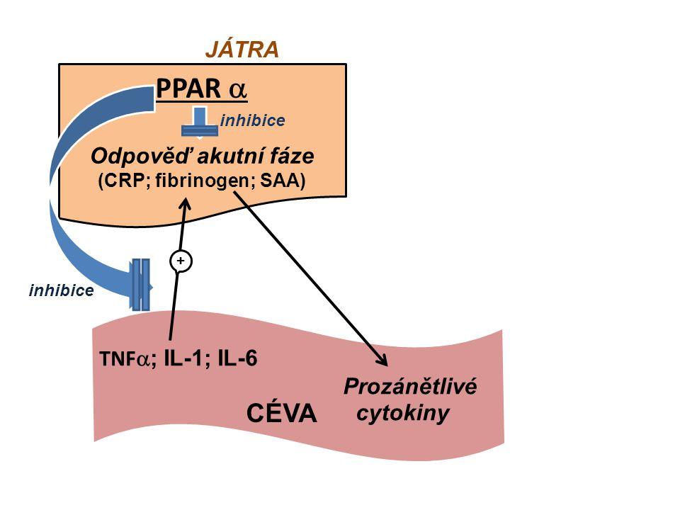 PPARala PPAR  Odpověď akutní fáze (CRP; fibrinogen; SAA) JÁTRA TNF  ; IL-1; IL-6 Prozánětlivé cytokiny + CÉVA inhibice