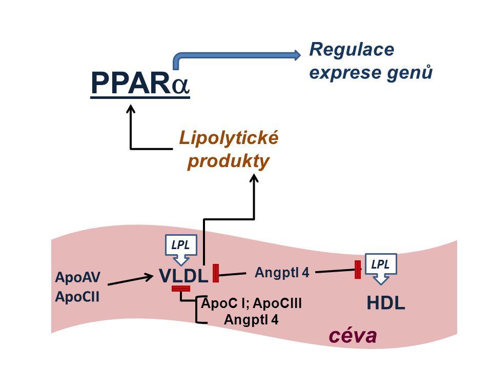 PPAR  Regulace exprese genů Lipolytické produkty ApoAV ApoCII VLDL HDL ApoC I; ApoCIII Angptl 4 Angptl 4 LPL céva