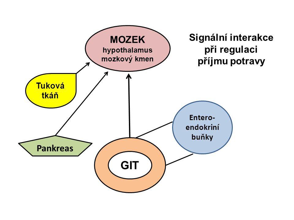 MOZEK hypothalamus mozkový kmen GIT Pankreas Tuková tkáň Entero- endokriní buňky Signální interakce při regulaci příjmu potravy