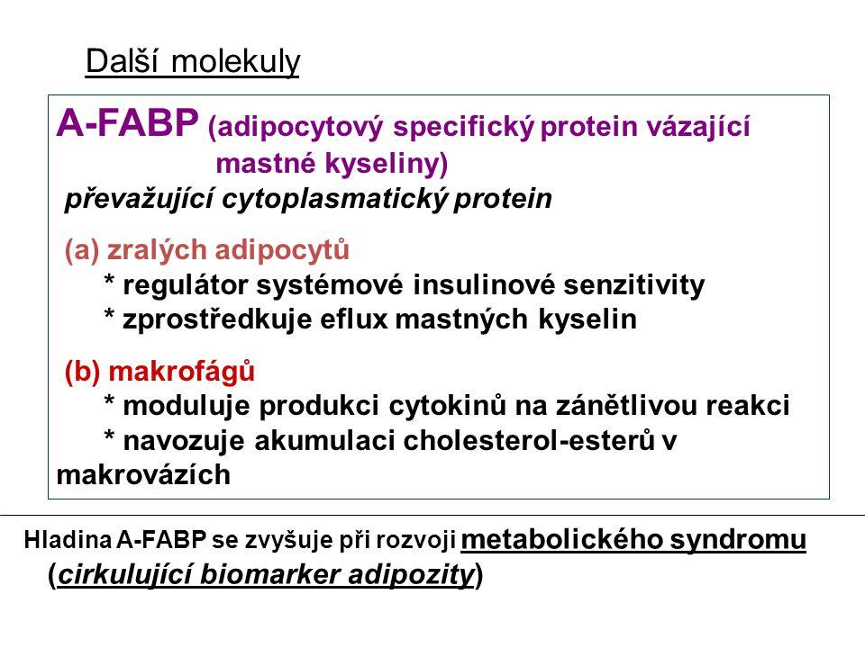 Další molekuly A-FABP (adipocytový specifický protein vázající mastné kyseliny) převažující cytoplasmatický protein (a) zralých adipocytů * regulátor systémové insulinové senzitivity * zprostředkuje eflux mastných kyselin (b) makrofágů * moduluje produkci cytokinů na zánětlivou reakci * navozuje akumulaci cholesterol-esterů v makrovázích Hladina A-FABP se zvyšuje při rozvoji metabolického syndromu (cirkulující biomarker adipozity)