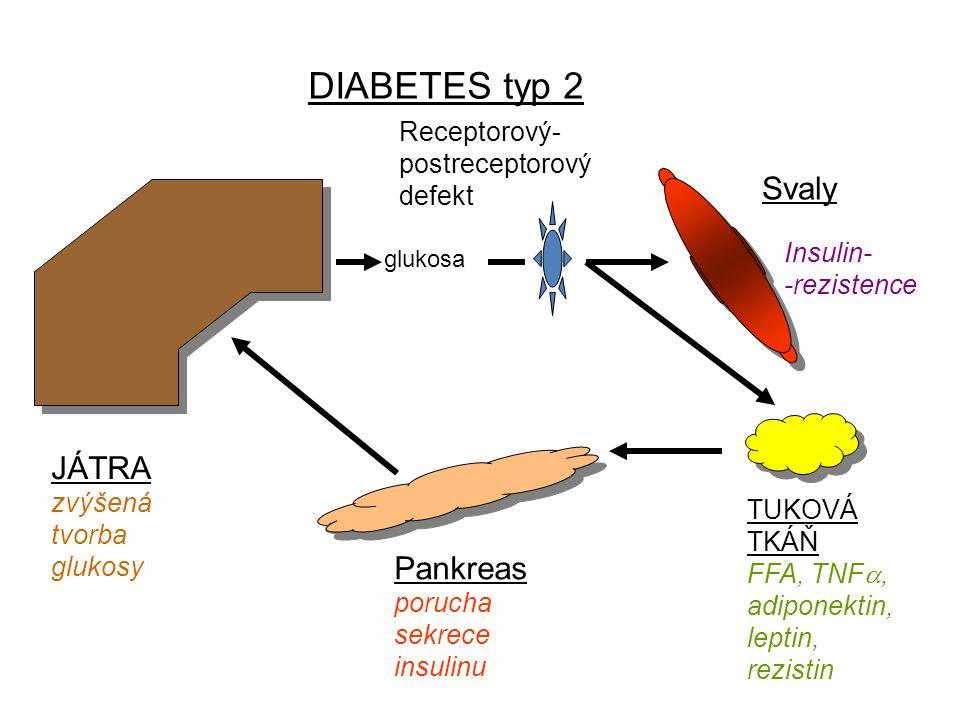 JÁTRA zvýšená tvorba glukosy Pankreas porucha sekrece insulinu Svaly TUKOVÁ TKÁŇ FFA, TNF , adiponektin, leptin, rezistin Insulin- -rezistence DIABETES typ 2 glukosa Receptorový- postreceptorový defekt