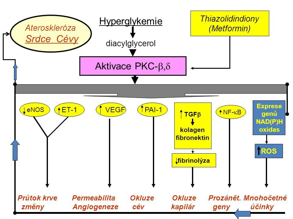 Hyperglykemie diacylglycerol Aktivace PKC-  eNOS ET-1 VEGFPAI-1 NF-  B TGF  kolagen fibronektin Exprese genů NAD(P)H oxidas ROS Průtok krve Permeabilita Okluze Okluze Prozánět.