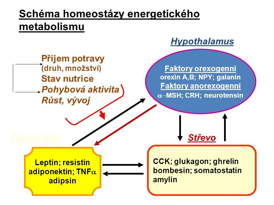 Schéma homeostázy energetického metabolismu Faktory orexogenní orexin A,B; NPY; galanin Faktory anorexogenní  MSH; CRH; neurotensin Hypothalamus CCK; glukagon; ghrelin bombesin; somatostatin amylin Střevo Leptin; resistin adiponektin; TNF  adipsin Příjem potravy (druh, množství) Stav nutrice Pohybová aktivita Růst, vývoj Tuková tkáň