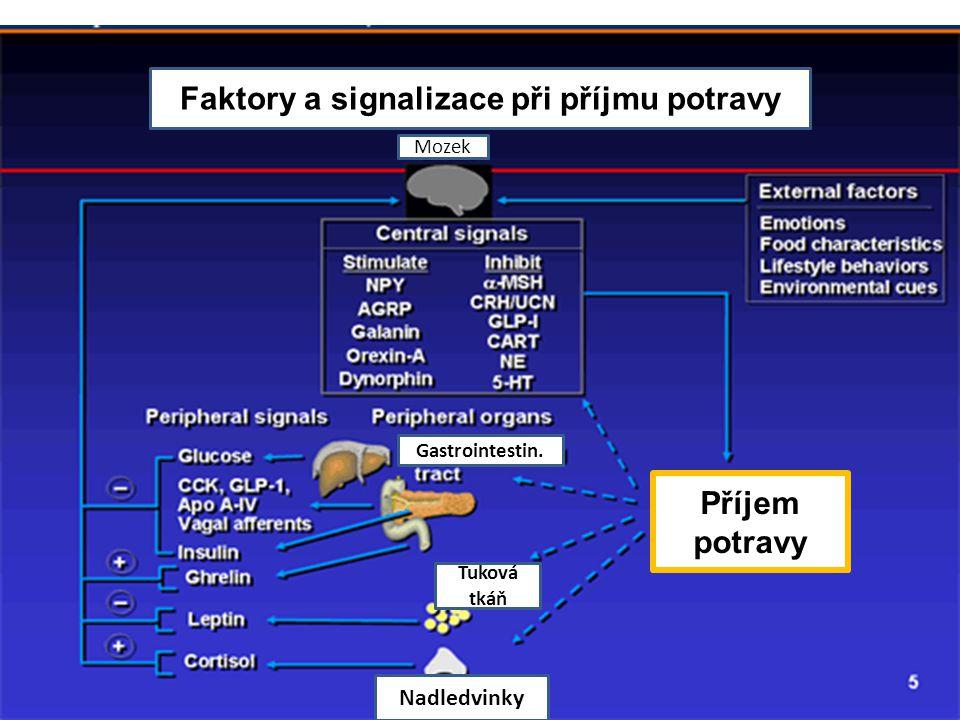 Faktory a signalizace při příjmu potravy Příjem potravy Mozek Nadledvinky Tuková tkáň Gastrointestin.