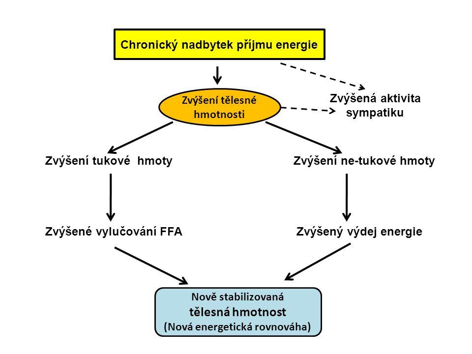 Chronický nadbytek příjmu energie Zvýšení tělesné hmotnosti Zvýšení tukové hmoty Zvýšení ne-tukové hmoty Zvýšené vylučování FFA Zvýšený výdej energie Nově stabilizovaná tělesná hmotnost (Nová energetická rovnováha) Zvýšená aktivita sympatiku