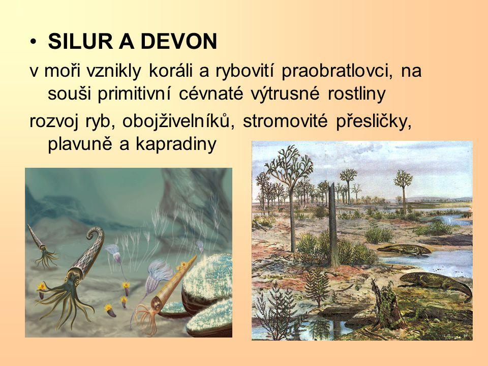 SILUR A DEVON v moři vznikly koráli a rybovití praobratlovci, na souši primitivní cévnaté výtrusné rostliny rozvoj ryb, obojživelníků, stromovité přes