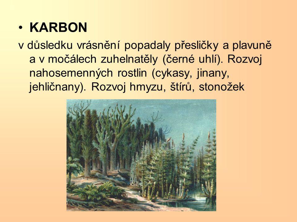 KARBON v důsledku vrásnění popadaly přesličky a plavuně a v močálech zuhelnatěly (černé uhlí). Rozvoj nahosemenných rostlin (cykasy, jinany, jehličnan