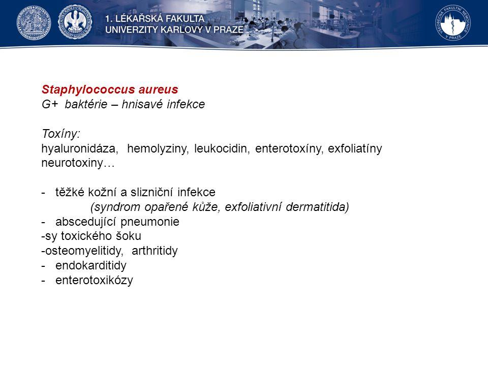 Staphylococcus aureus G+ baktérie – hnisavé infekce Toxíny: hyaluronidáza, hemolyziny, leukocidin, enterotoxíny, exfoliatíny neurotoxiny… - těžké kožní a slizniční infekce (syndrom opařené kůže, exfoliativní dermatitida) - abscedující pneumonie -sy toxického šoku -osteomyelitidy, arthritidy - endokarditidy - enterotoxikózy