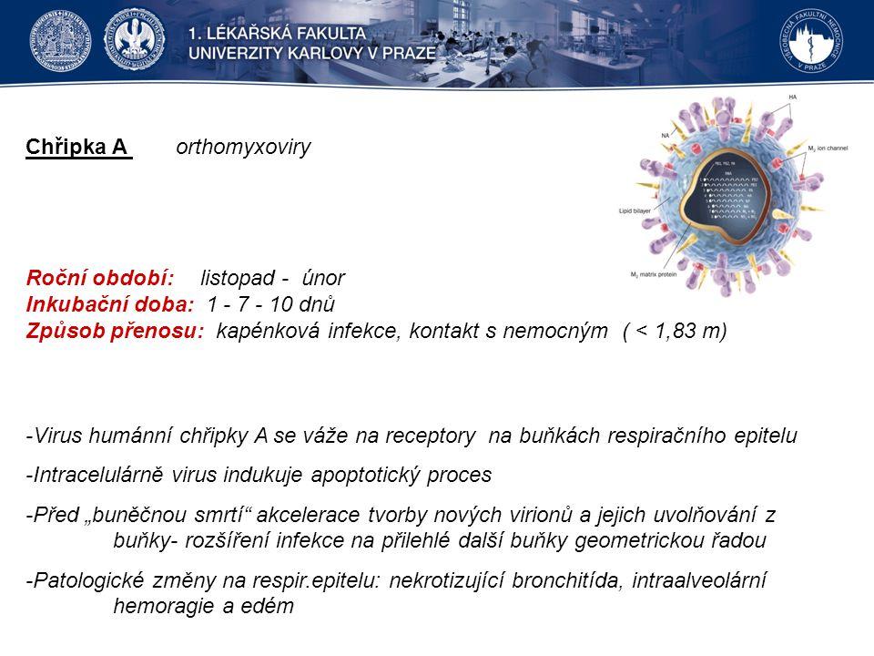 """Chřipka A orthomyxoviry Roční období: listopad - únor Inkubační doba: 1 - 7 - 10 dnů Způsob přenosu: kapénková infekce, kontakt s nemocným ( < 1,83 m) -Virus humánní chřipky A se váže na receptory na buňkách respiračního epitelu -Intracelulárně virus indukuje apoptotický proces -Před """"buněčnou smrtí akcelerace tvorby nových virionů a jejich uvolňování z buňky- rozšíření infekce na přilehlé další buňky geometrickou řadou -Patologické změny na respir.epitelu: nekrotizující bronchitída, intraalveolární hemoragie a edém"""