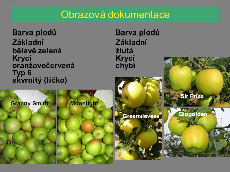 Obrazová dokumentace Mivibe Vysočina Barva plodů Základní bělavě zelená Krycí oranžovočervená Typ 6 skvrnitý (líčko) Zita Granny SmithMoonlight Barva