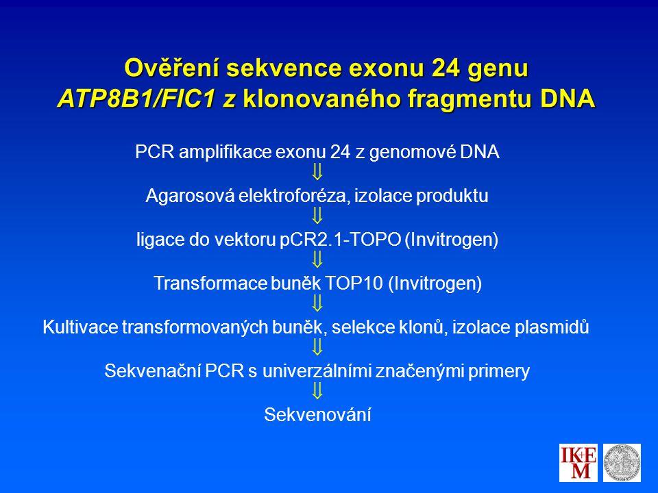 Ověření sekvence exonu 24 genu ATP8B1/FIC1 z klonovaného fragmentu DNA PCR amplifikace exonu 24 z genomové DNA  Agarosová elektroforéza, izolace produktu  ligace do vektoru pCR2.1-TOPO (Invitrogen)  Transformace buněk TOP10 (Invitrogen)  Kultivace transformovaných buněk, selekce klonů, izolace plasmidů  Sekvenační PCR s univerzálními značenými primery  Sekvenování