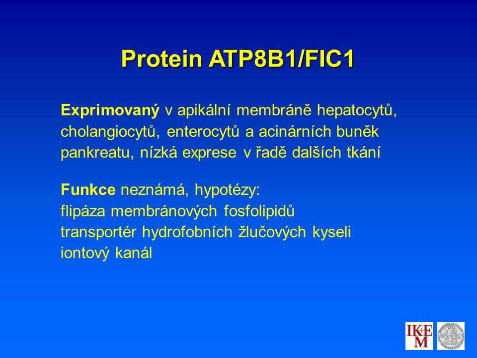 Protein ATP8B1/FIC1 Exprimovaný v apikální membráně hepatocytů, cholangiocytů, enterocytů a acinárních buněk pankreatu, nízká exprese v řadě dalších tkání Funkce neznámá, hypotézy: flipáza membránových fosfolipidů transportér hydrofobních žlučových kyseli iontový kanál