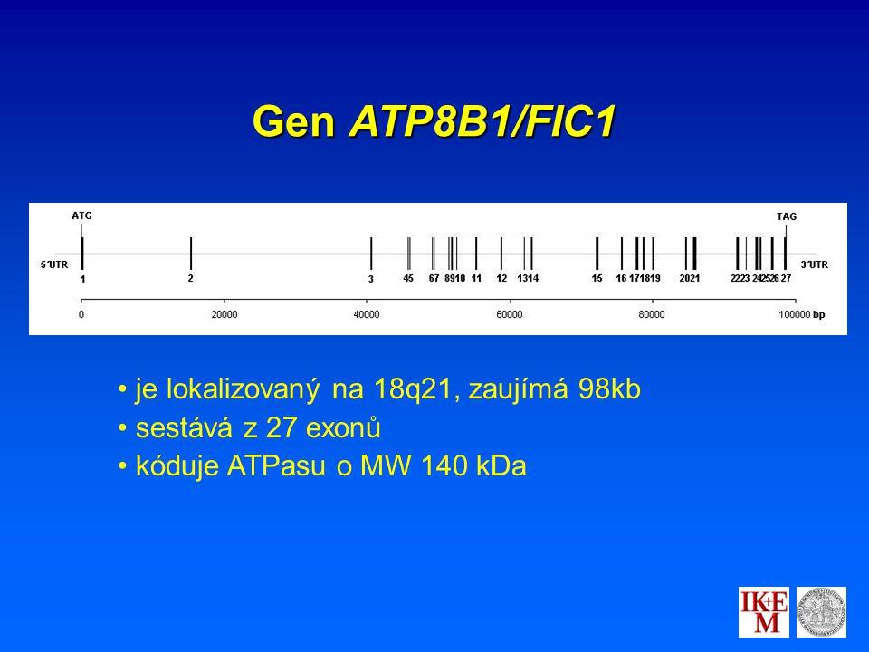 Gen ATP8B1/FIC1 je lokalizovaný na 18q21, zaujímá 98kb sestává z 27 exonů kóduje ATPasu o MW 140 kDa