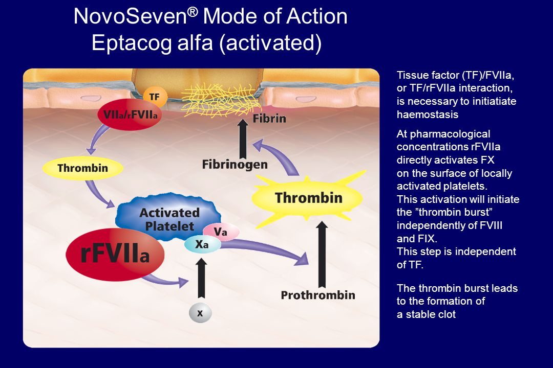NovoSeven ® Mode of Action Eptacog alfa (activated) Tissue factor (TF)/FVIIa, or TF/rFVIIa interaction, is necessary to initiatiate haemostasis At pharmacological concentrations rFVIIa directly activates FX on the surface of locally activated platelets.