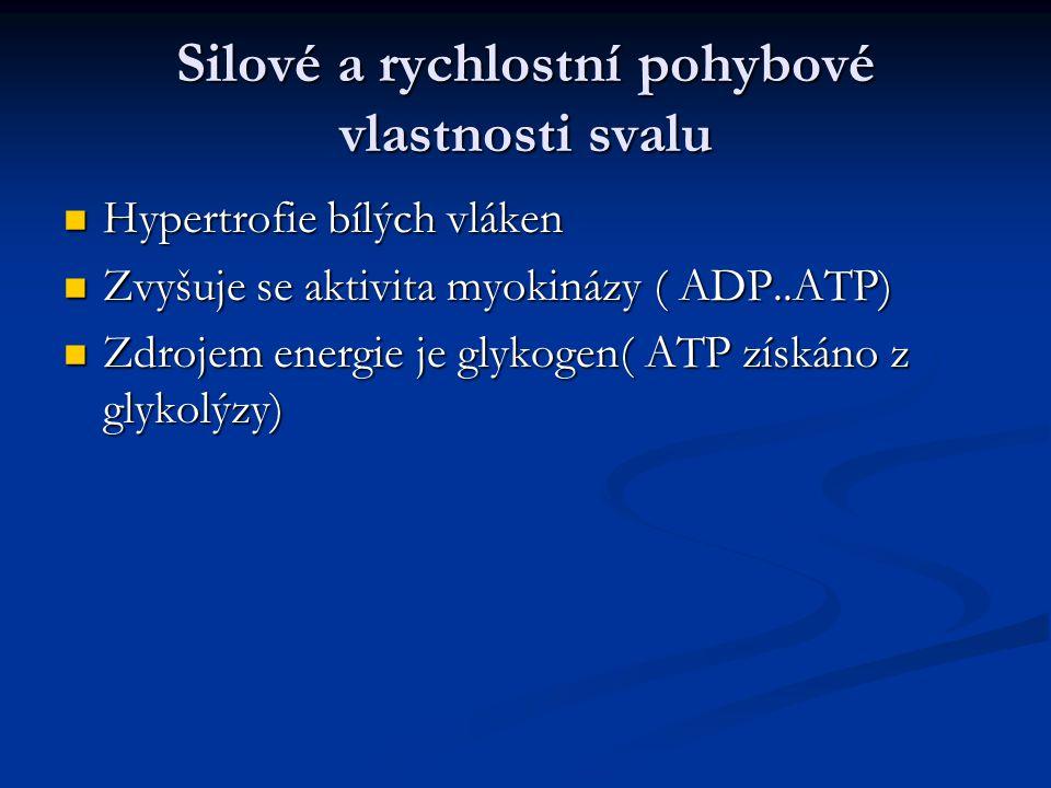 Silové a rychlostní pohybové vlastnosti svalu Hypertrofie bílých vláken Hypertrofie bílých vláken Zvyšuje se aktivita myokinázy ( ADP..ATP) Zvyšuje se