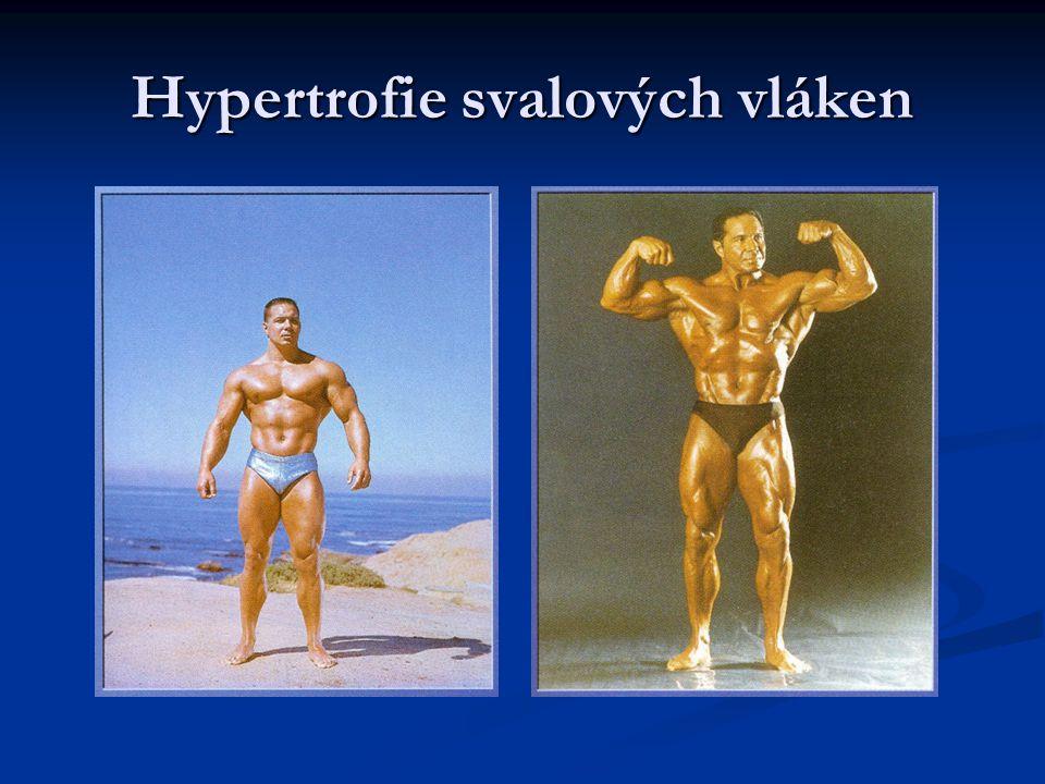 Hypertrofie svalových vláken