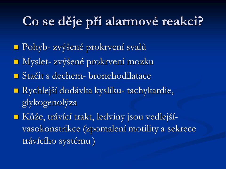 Co se děje při alarmové reakci? Pohyb- zvýšené prokrvení svalů Pohyb- zvýšené prokrvení svalů Myslet- zvýšené prokrvení mozku Myslet- zvýšené prokrven