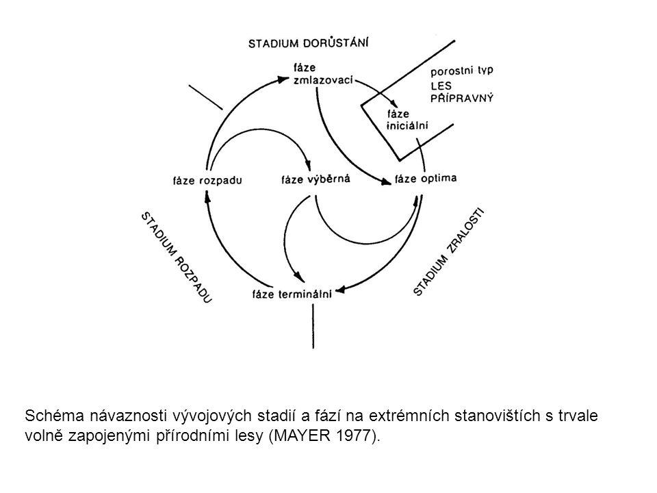 Schéma návaznosti vývojových stadií a fází na extrémních stanovištích s trvale volně zapojenými přírodními lesy (MAYER 1977).