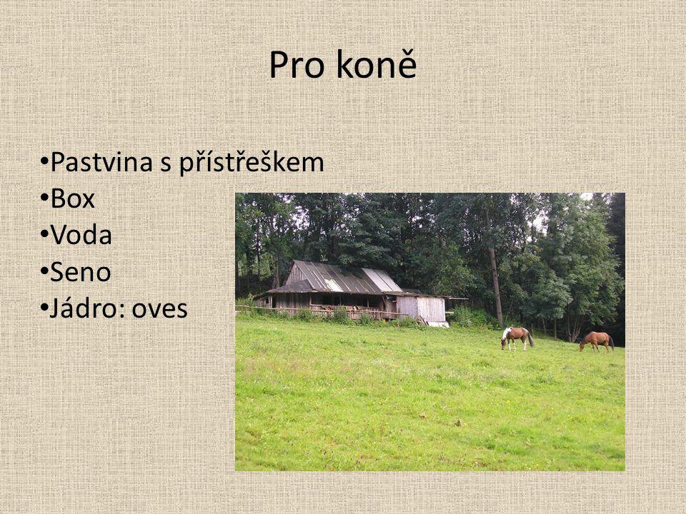 Pro koně Pastvina s přístřeškem Box Voda Seno Jádro: oves