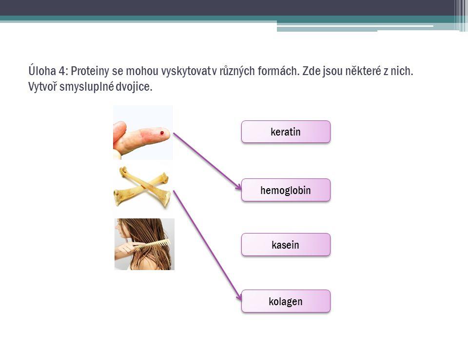 Úloha 4: Proteiny se mohou vyskytovat v různých formách. Zde jsou některé z nich. Vytvoř smysluplné dvojice. keratin hemoglobin kasein kolagen