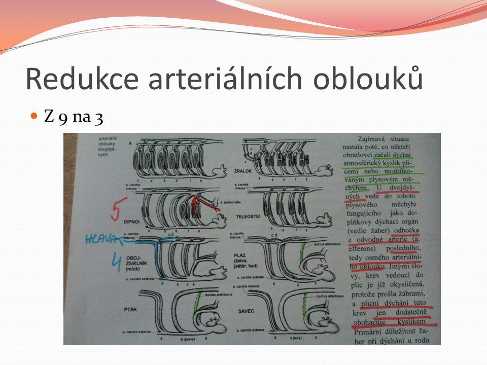 Redukce arteriálních oblouků Z 9 na 3