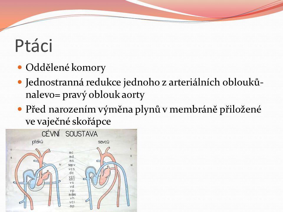 Ptáci Oddělené komory Jednostranná redukce jednoho z arteriálních oblouků- nalevo= pravý oblouk aorty Před narozením výměna plynů v membráně přiložené ve vaječné skořápce