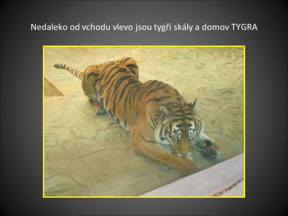 Nedaleko od vchodu vlevo jsou tygří skály a domov TYGRA