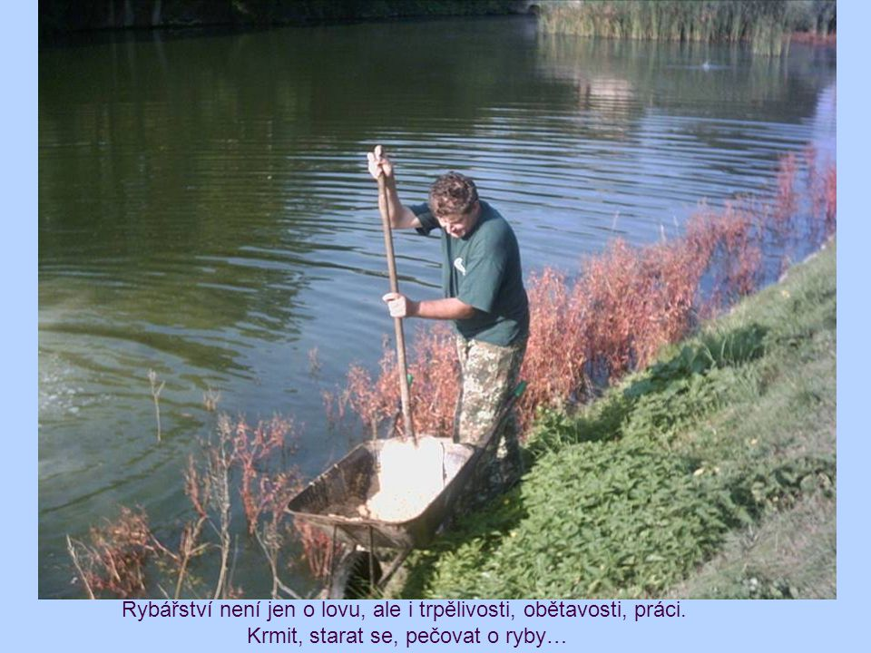 Rybářství není jen o lovu, ale i trpělivosti, obětavosti, práci. Krmit, starat se, pečovat o ryby…