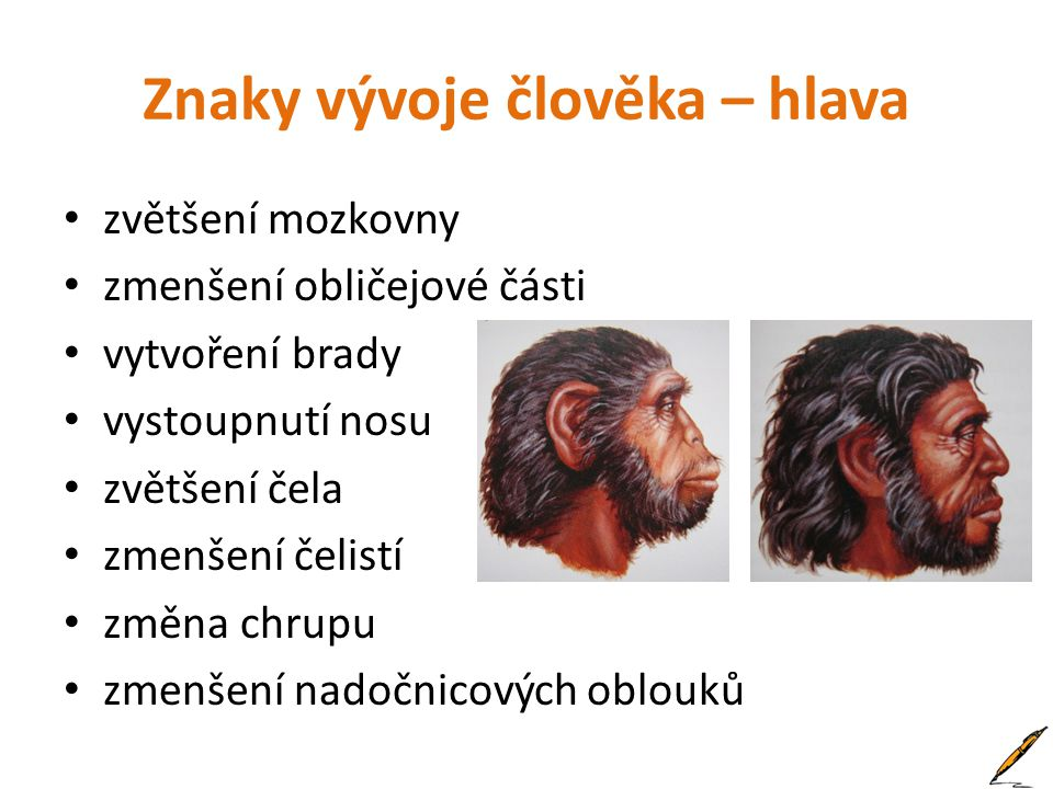 Znaky vývoje člověka – hlava zvětšení mozkovny zmenšení obličejové části vytvoření brady vystoupnutí nosu zvětšení čela zmenšení čelistí změna chrupu zmenšení nadočnicových oblouků